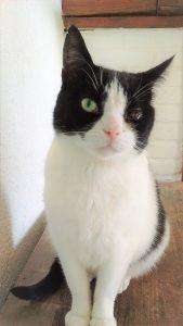 niezen kat